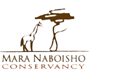 Mara Naboisho Conservancy integrates Maasai, tourism and wildlife interests through equitable decision rights and income participation.