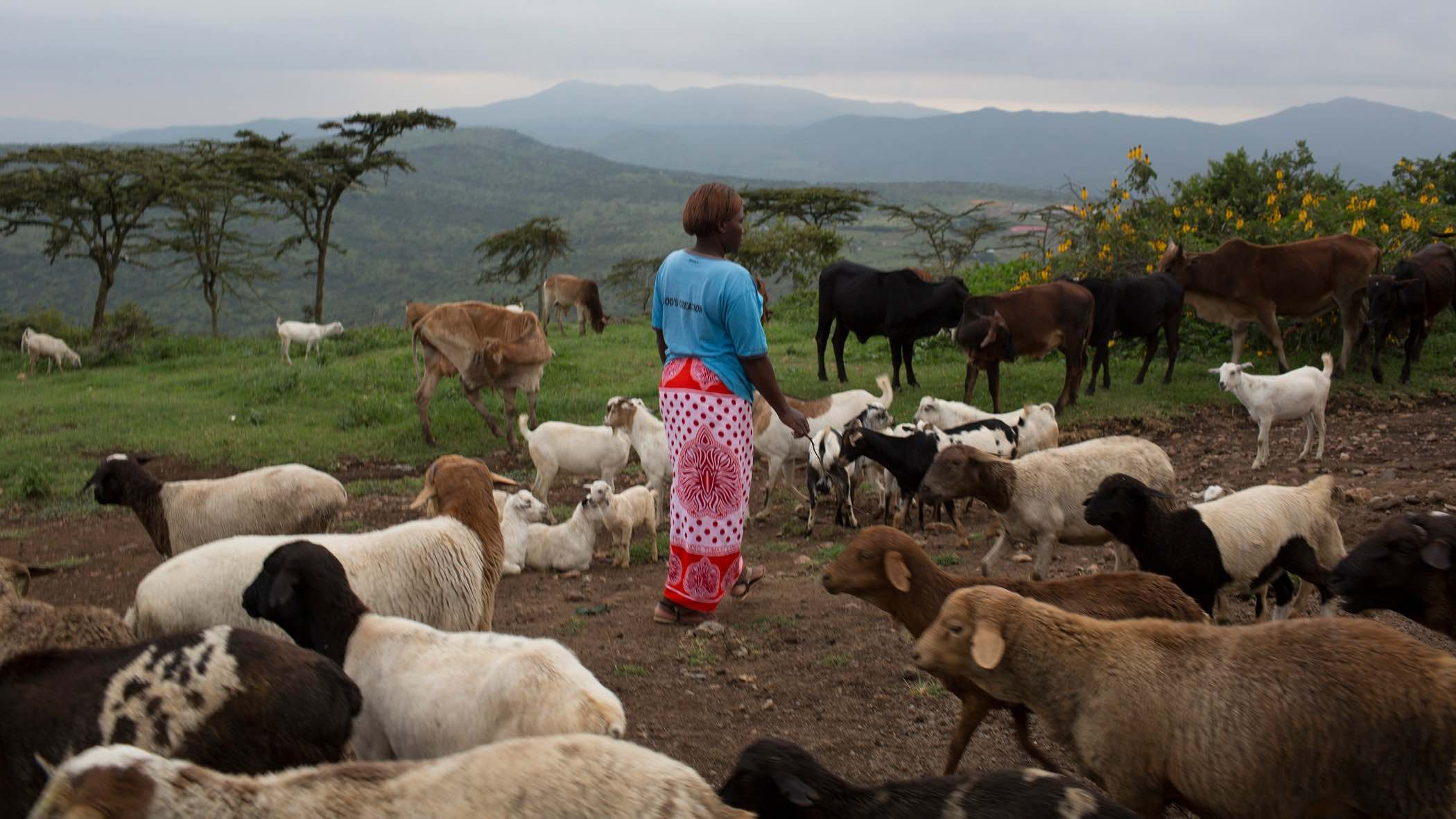 Faith Papei Saltaban surrounded by her herd of goats.